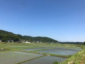 【青空のコントラストと水田から森への緑のコントラストが美しい葉山島での1枚】