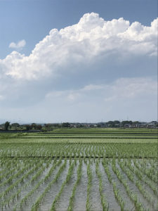 【入道雲のようにどこまでも広い新戸の水田地帯から1枚】