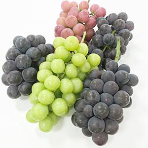 食べ比べをして品種ごとの風味の違いを感じてください!